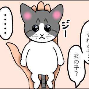 【猫漫画】ソラの話⑥ 男の子?女の子?どっちなの⁉ 仔猫たちを動物病院に連れて行ったよ!