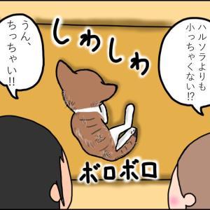【猫漫画】ボロボロの子猫① 友人がまた子猫を拾って来ちゃったよ⁉