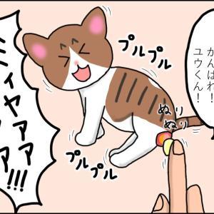 【猫漫画】ボロボロの子猫④ 薬が嫌なのは猫も人も一緒!
