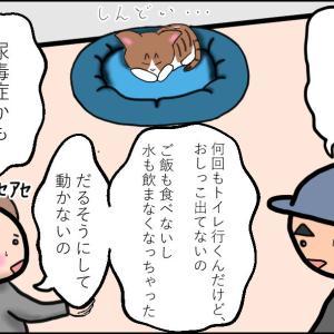 【猫漫画】ボロボロの子猫⑦ ユウの体に異変が…!! 恐ろしい尿毒症…