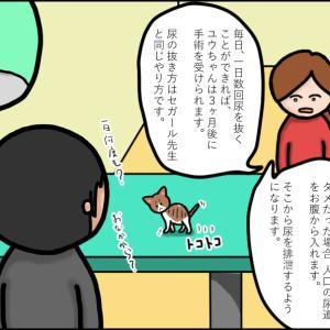 【猫漫画】ボロボロの子猫⑨ 前例がない! 手術できない!! どうなっちゃうの⁉