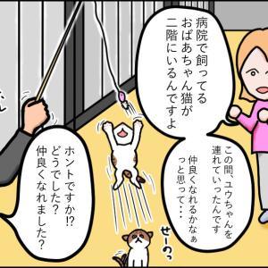 【猫漫画】ボロボロの子猫⑩ つらいだけじゃない!愛のある入院生活!!な子猫