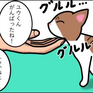 【猫漫画】ボロボロの子猫⑬ 手術決行! 無事でいて…!!