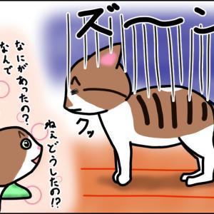 【猫漫画】怒られる猫を見て、煽りまくる猫!! 前編