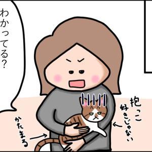 【猫漫画】抱っこされる猫を見て、煽りまくる猫!! 前編