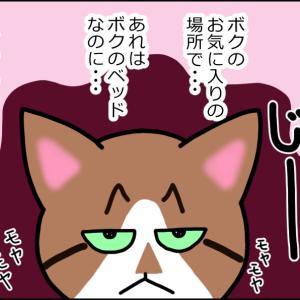 【猫漫画】先輩風を吹かせたくて返り討ちに合う猫