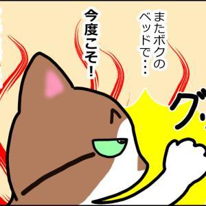 【猫漫画】今度こそ先輩風を吹かせたい猫