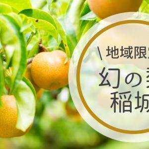 稲城の梨【2021】収穫時期はいつ?値段や直売所で買えた品種も紹介!