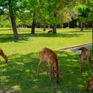 奈良のシカは飢えているのだろうか?