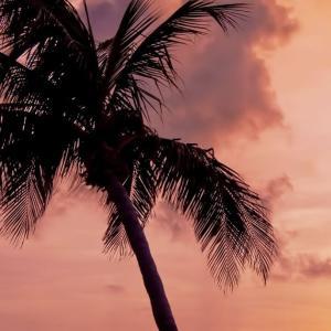 황혼의 해변