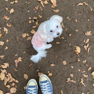 秋の代々木公園へ♪その2