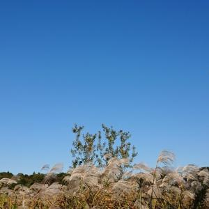 銀杏臭い秋