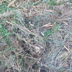 堆肥作りに挑戦!材料は雑草で 第1話