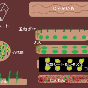 【2020年11月】今育てているのは何?私の畑を紹介します!in 沖縄