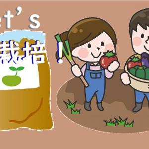 畑がない!それなら袋栽培はいかが?