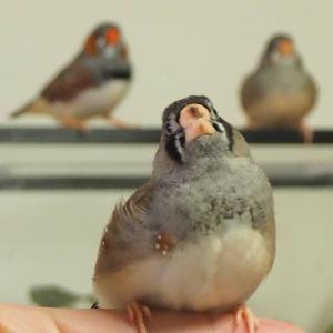 今日の放鳥の様子