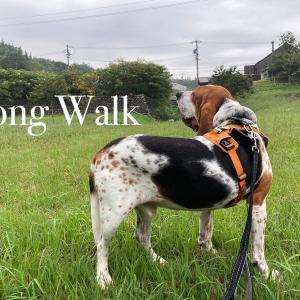 お散歩がどんどん長くなる件