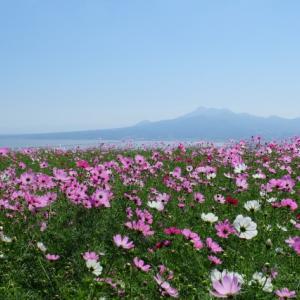 【長崎観光】秋の絶景を堪能!コスモス畑が美しい「白木峰高原」