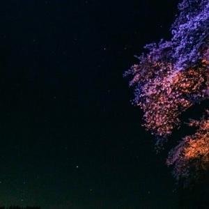 ノマド女子大生日記6 星に惹かれた気仙沼からもうすぐ立つ。だから星を見に行った。