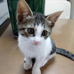 子猫のお見合い用写真