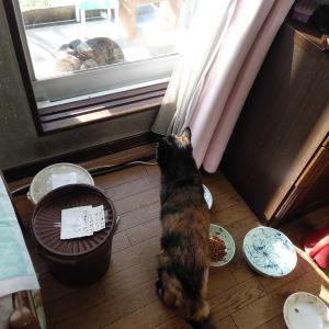 朝の猫ボランティア