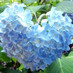 六甲山の植物園へあじさいツーリング