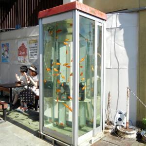 金魚が泳ぐ電話ボックス!?ツーリング