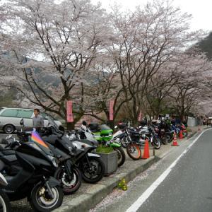千本桜の大野ダムさくら祭りツーリング
