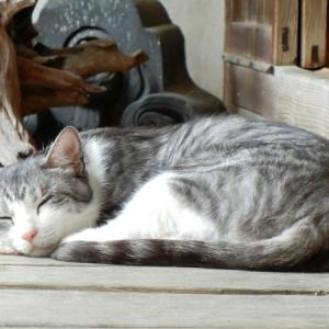 ポニーとネコがいる古民家カフェツーリングin丹波