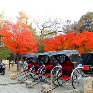 紅葉の名所!!奈良公園へ紅葉ソロツーリングin奈良県奈良市