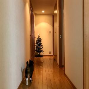 11/23(祝)・クリスマスツリー