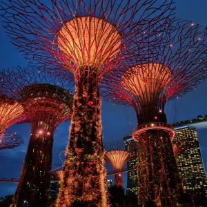 Gardens by the bay ~ Mid-autumn festival