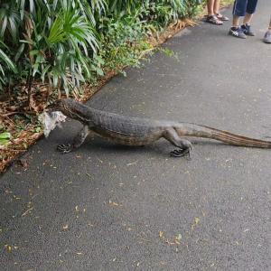 怪物との遭遇!~世界遺産 Botanic Garden
