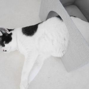 【猫部屋】カラーボックスに入れるだけの猫ベッド