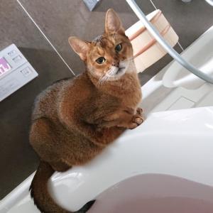 しっぽ浴のススメ