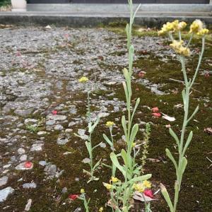 一雨ごとに夏が来る。