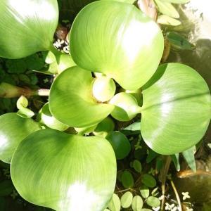 いじわるメダカと水草の隆盛