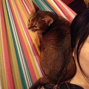 猫周りの好きな音