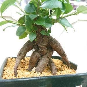 今日出会ったオモロイ植物