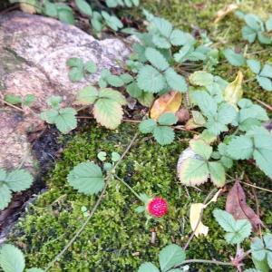 庭の赤いものシリーズ