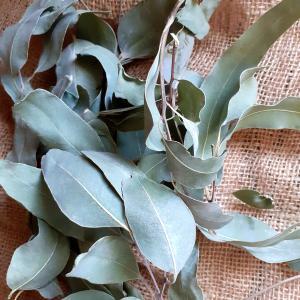 ユーカリの葉