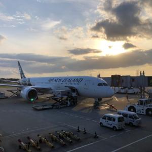 ニュージーランドに戻ります!
