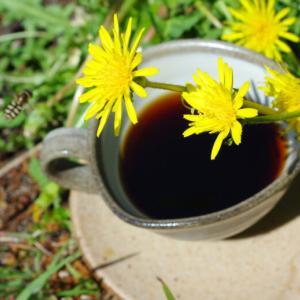 【最新】たんぽぽコーヒーとは?効能効能から作り方・おすすめまでご紹介