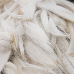 筆工房風景 冬毛(ふゆげ)と夏毛(なつげ)の違い