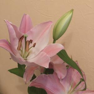 花に囲まれる幸せ