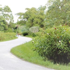 ◆旅レポート◆古き良きシンガポールが楽しめる穴場◆ウビン島ぶらり旅◆ネイチャーエリアでサイクリング◆