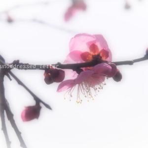 春よ来い(^^♪