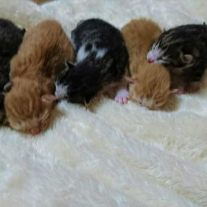 元気いっぱいの赤ちゃんたち。
