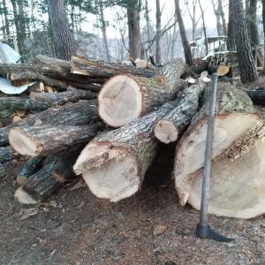 コナラの原木、大量入荷