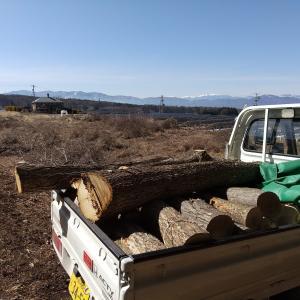 ホンダの軽トラック【アクティーHA4】で薪狩りに行く